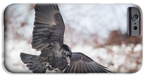 Raven iPhone Cases - Raven In Flight iPhone Case by Bill  Wakeley