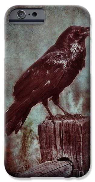 Old Fence Posts iPhone Cases - Raven Perched on a Post iPhone Case by Jill Battaglia