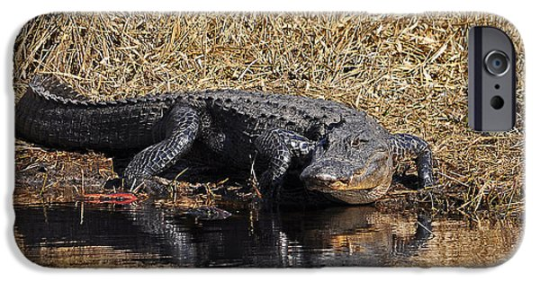 Alligator iPhone Cases - Ravenous Reptile iPhone Case by Al Powell Photography USA