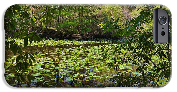 Nature Scene iPhone Cases - Ravine Gardens - A Different Look at Florida iPhone Case by Christine Till