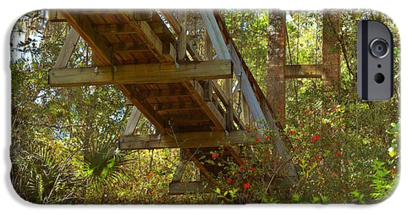 Nature Scene iPhone Cases - Ravine State Gardens Palatka Florida iPhone Case by Christine Till