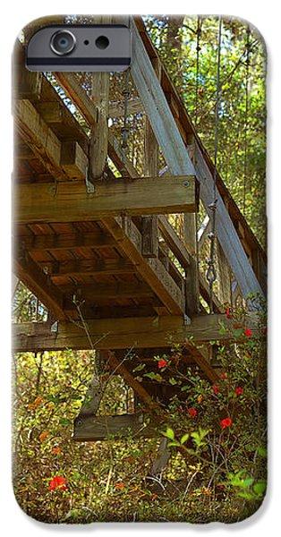 Ravine State Gardens Palatka Florida iPhone Case by Christine Till