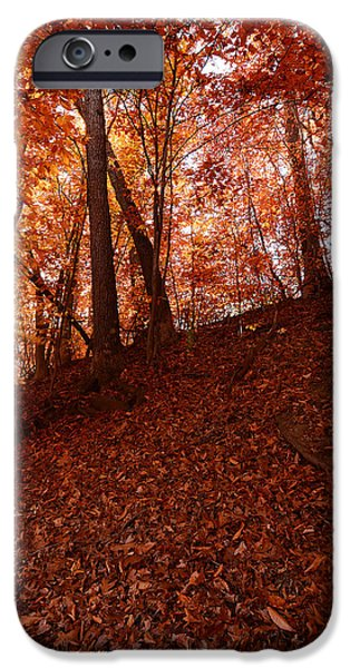 Autumn In New England iPhone Cases - Rays Of Leaves iPhone Case by Lourry Legarde