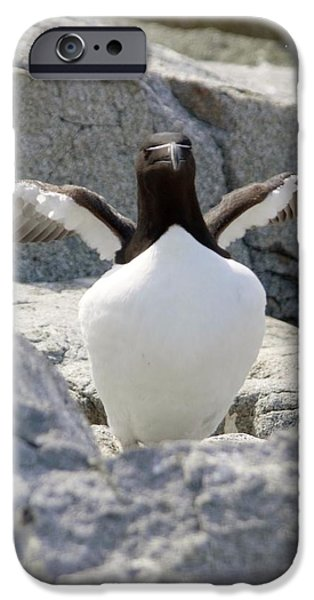 Razorbill iPhone Cases - Razorbill Extends Wings iPhone Case by Lena Hatch