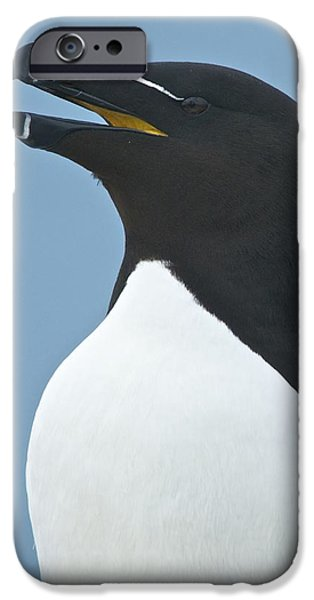 Razorbill iPhone Cases - Razorbill iPhone Case by Gerard Monteux