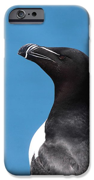 Razorbill iPhone Cases - Razorbill Profile iPhone Case by Bruce J Robinson