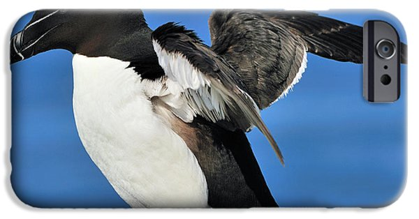 Razorbill iPhone Cases - Razorbill iPhone Case by Tony Beck