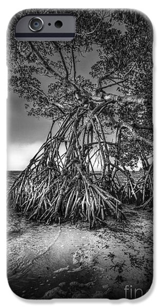 Palmettos iPhone Cases - Reaching For Earth And Sky-bw iPhone Case by Marvin Spates