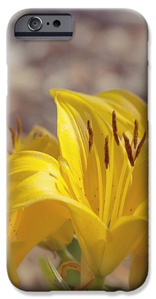Reaching for the Light iPhone Case by Kim Hojnacki