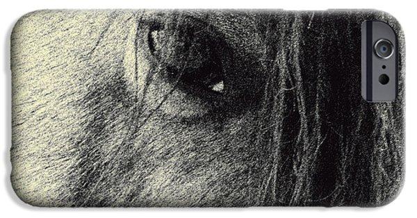 Paso Fino Stallion iPhone Cases - Read My Eyes iPhone Case by Patricia Keller