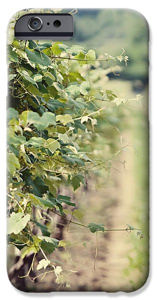 Ready for Harvest  iPhone Case by Lisa Russo