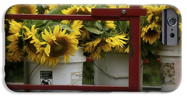 Buttonwood Farm iPhone Cases - Ready for Sale iPhone Case by Dorothy Drobney