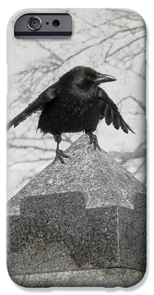 Crows iPhone Cases - Ready To Fly iPhone Case by Gothicolors Donna Snyder