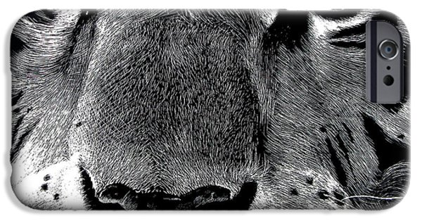 Dog Close-up Paintings iPhone Cases - Ready To Pounce iPhone Case by Bryan Horn