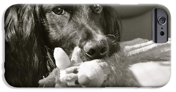 Dog And Toy iPhone Cases - Ready to Ride iPhone Case by Kristina Deane