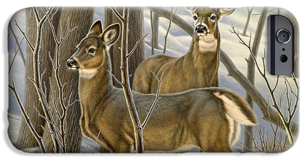 Whitetail Deer iPhone Cases - Ready - Whitetail Deer iPhone Case by Paul Krapf