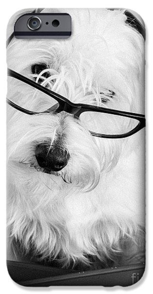 Dog Photography iPhone Cases - Really Portait of a Westie wearing glasses iPhone Case by Edward Fielding