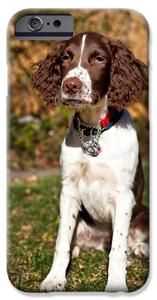 Setter Pointer iPhone Cases - Reba the Brittany Spaniel iPhone Case by Henry Inhofer