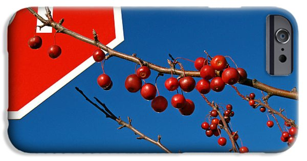 Disobedient iPhone Cases - Rebellious Ornamental Crabapples in Autumn iPhone Case by Anna Lisa Yoder