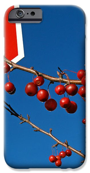 Rebellious Ornamental Crabapples in Autumn iPhone Case by Anna Lisa Yoder