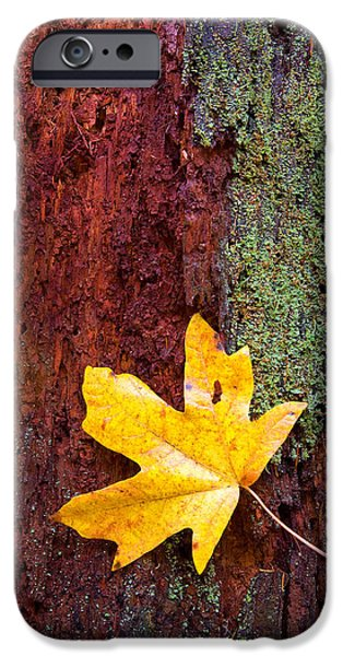 Autumn Trees iPhone Cases - Reclamation iPhone Case by Mike  Dawson