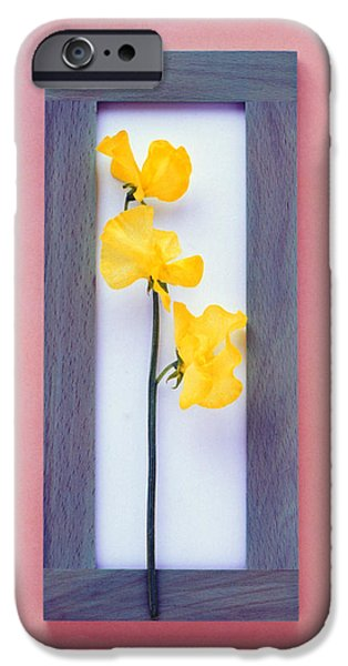 Rectangular iPhone Cases - Rectangular Purple Frame With Yellow iPhone Case by Panoramic Images