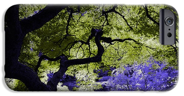 Branches iPhone Cases - Recurring Dreams of Color iPhone Case by Marvin Blaine