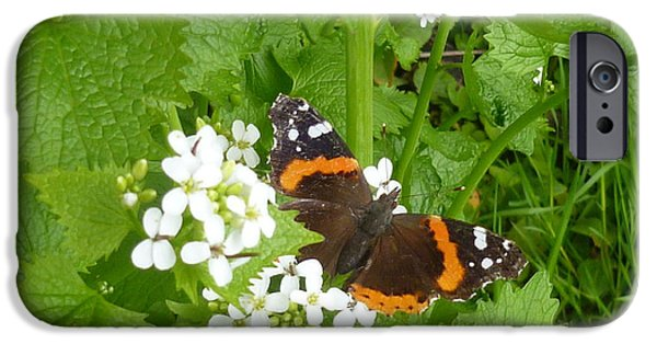 Meadow Photographs iPhone Cases - Red Admiral Butterfly iPhone Case by Lingfai Leung