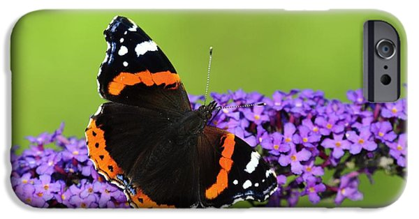 Eating Entomology iPhone Cases - Red Admiral Feeding On Buddleia Flowers iPhone Case by Colin Varndell