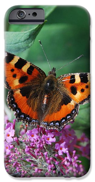 Admiral Digital iPhone Cases - Red Admiral iPhone Case by Tom Wade