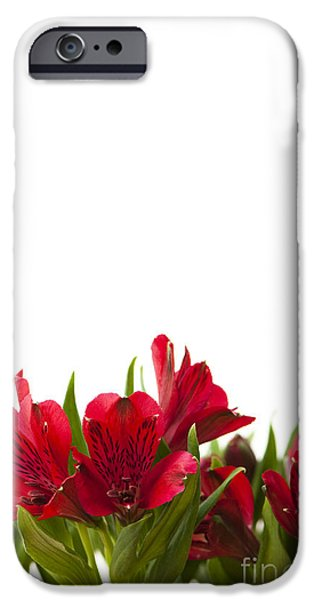 Day Lilies iPhone Cases - Red Alstroemeria iPhone Case by Anne Gilbert