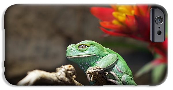 Flying Frog iPhone Cases - Red and Green iPhone Case by Barbara McMahon