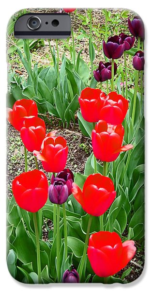 Red and Purple Tulips iPhone Case by Aimee L Maher Photography and Art