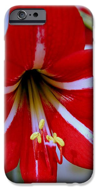 Red and White Lilly iPhone Case by Debra Forand