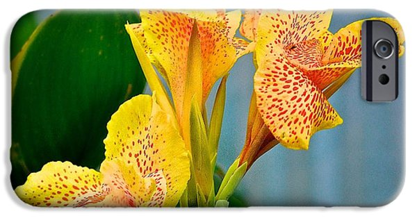 Art By God iPhone Cases - Red and Yellow Flower iPhone Case by Kristina Deane