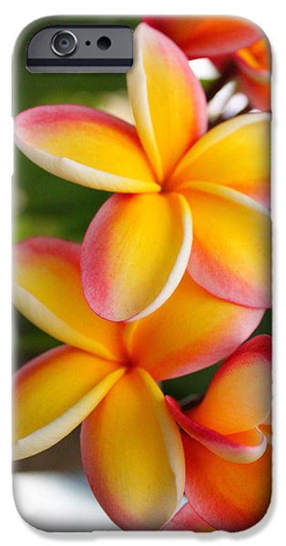 Delicate iPhone Cases - Plumeria Smoothie iPhone Case by Brian Governale