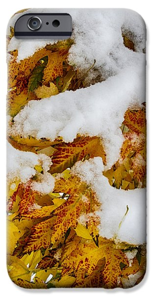 Red Autumn Maple Leaves With Fresh Fallen Snow iPhone Case by James BO  Insogna