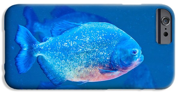 Piranha iPhone Cases - Red-bellied Piranha iPhone Case by Mark Newman
