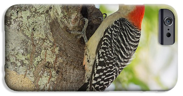 Snow Scene iPhone Cases - Red-bellied Woodpecker iPhone Case by John Bailey