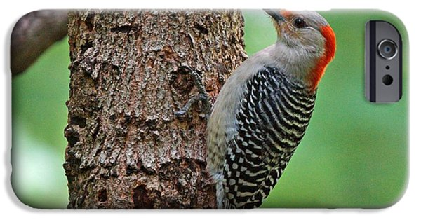 Evansville iPhone Cases - Red Bellied Woodpecker iPhone Case by Sandy Keeton