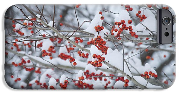 Winter In Maine iPhone Cases - Red Berries iPhone Case by Alana Ranney