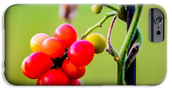 Berry Pyrography iPhone Cases - Red Berries iPhone Case by Don L Williams