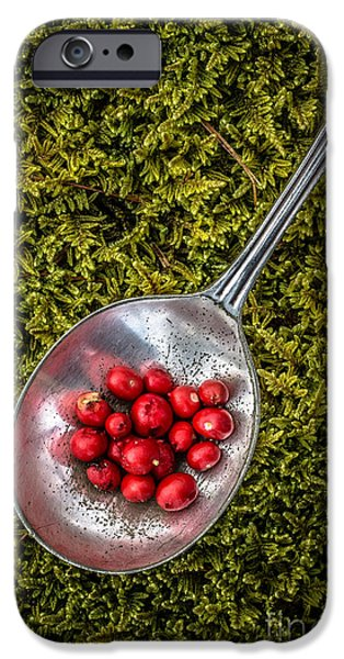 Moss iPhone Cases - Red Berries Silver Spoon Moss iPhone Case by Edward Fielding