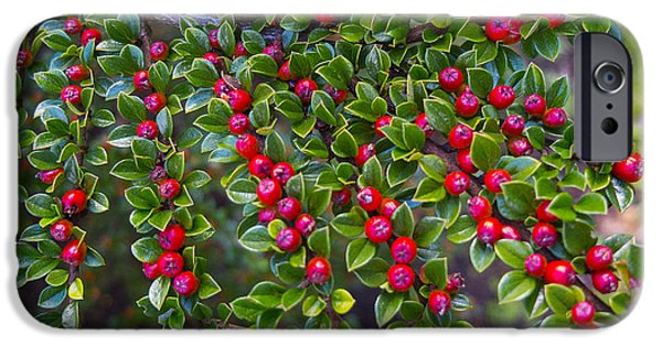 Berry iPhone Cases - Red Berrys iPhone Case by Mark Mitchell