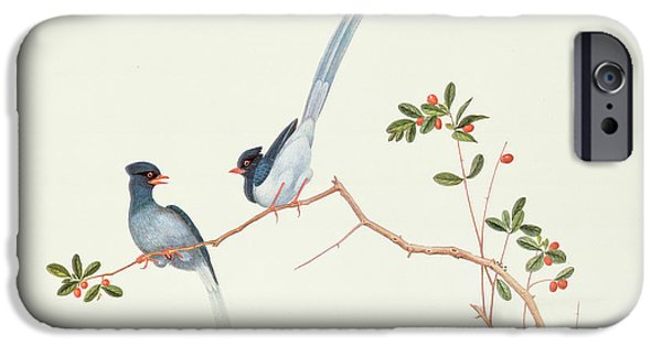 Ornithology iPhone Cases - Red Billed Blue Magpies on a Branch with Red Berries iPhone Case by Chinese School