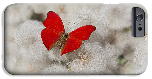 Antenna iPhone Cases - Red Butterfly on Flower Fluff iPhone Case by Garry Gay