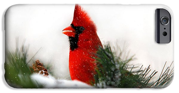 Christmas Greeting iPhone Cases - Red Cardinal iPhone Case by Christina Rollo