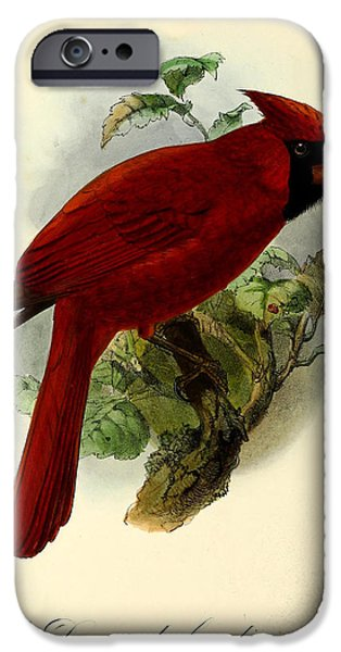 Cardinal iPhone Cases - Red Cardinal iPhone Case by J G Keulemans