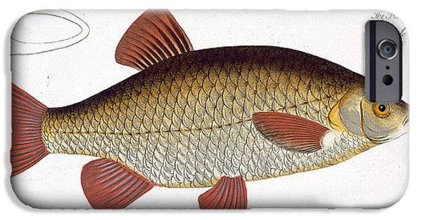 Hunting Drawings iPhone Cases - Red Carp iPhone Case by Andreas Ludwig Kruger