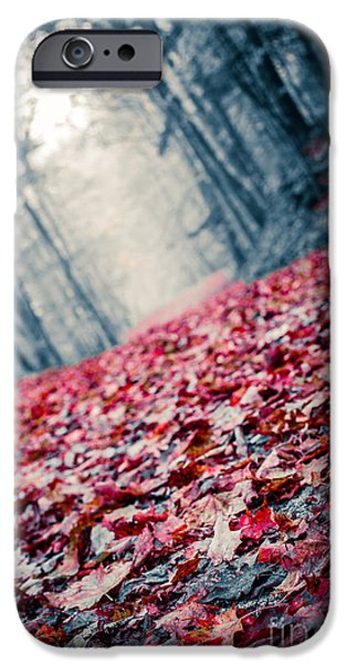 Forest Floor iPhone Cases - Red Carpet iPhone Case by Edward Fielding
